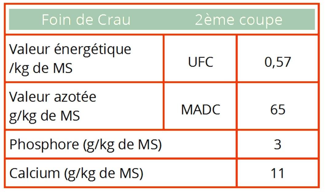Tableau Crau 2eme cp Chevaux
